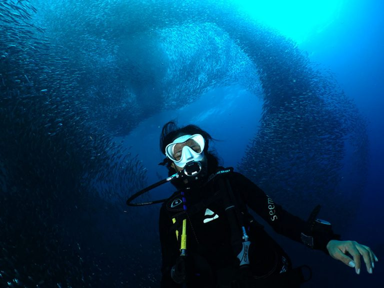 our guest diving with the moalboal sardines