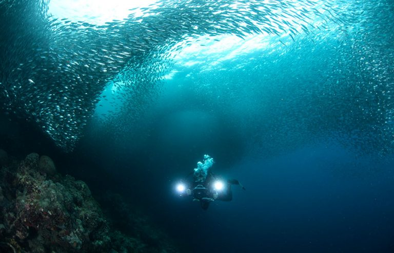 underwater filming sardines with blue abyss dive shop